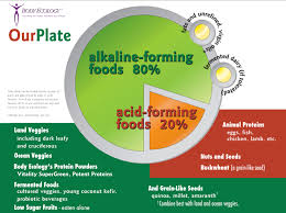 body ecology plate clean eating pinterest ecology bodies