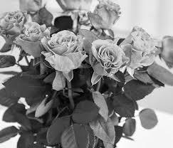 dundalk florist 18 best baltimore florists expertise