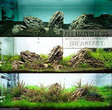 Aquarium Tropical Plants Aquascaping Ada Dragon Stone Ohko Rock Aquarium Tropical Fish