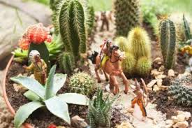 Cactus Garden Ideas 22 Outdoor Cactus Garden Planter Ideas Succulent Garden Made Out