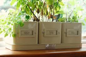 Kitchen Herb Pots by This Little House The Kitchen Daisychains U0026 Dreamers