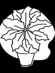 poinsettia coloring pages poinsettia coloring page coloring home