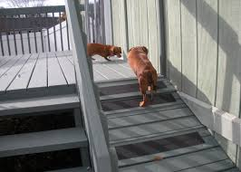 pet friendly home featuring dog ramp from deck home diy ideas