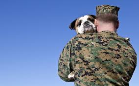 vets for vets how veterans can get free pet insurance for their