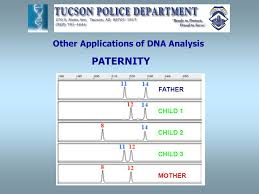 forensic dna analysis jelena a myers senior criminalist dna