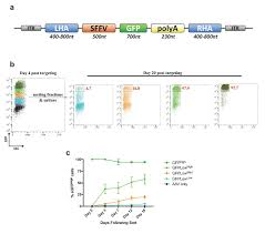 multiplexed genetic engineering of human hematopoietic stem and