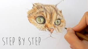 step by step how to draw color realistic cat fur and nose with