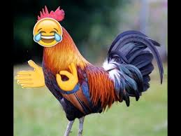 Rooster Meme - rooster memes youtube