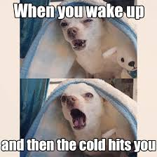 Dog In Bed Meme - 17 dog pictures that perfectly sum up your hatred of winter barkpost
