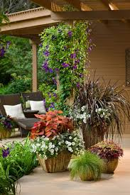 hanging basket plants for sun annual flowers for containers in sun or shade bradford greenhouses