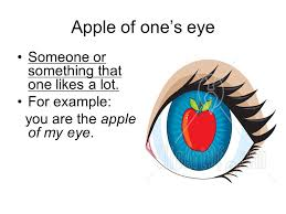 food idioms apple of one s eye someone or something that one