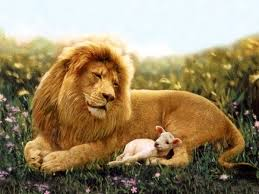 25 lion lamb ideas jesus lion