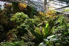 Plants In The Tropical Rain Forest - tropical rainforest space for life