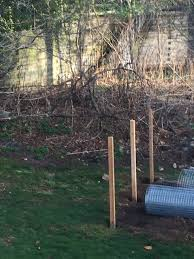 vegetable garden near a pressure treated wood retaining wall ask