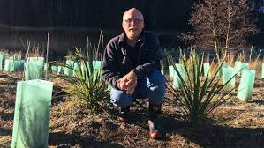 tasman plants 17 000 trees on his property to bring