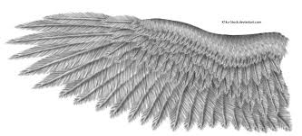 eagle wings drawing more information
