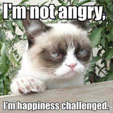 Memes Grumpy Cat - i m not angry cat meme cat planet cat planet