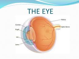 Picture Of Eye Anatomy Science 3 Parts Of The Eye