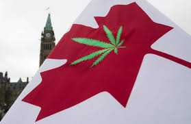 Weed Flag Justin Trudeau Promises That A Liberal Government Would Legalize