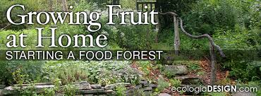 Fruit Tree Garden Layout Growing Fruit At Home Starting A Food Forest Ecologia Design