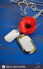 remembrance dog tags usa memorial day concept of remembrance poppy on blue