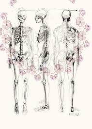 Human Anatomy Skeleton Diagram Human Skeleton Drawing Multi View Bones Pinterest Skeleton