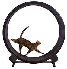 amazon pet supplies black friday amazon com one fast cat exercise wheel black pet supplies