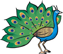 free peacock clipart free download clip art free clip art on