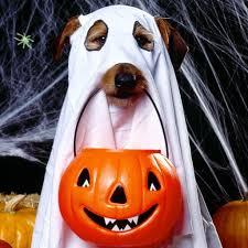 halloween background jack download wallpaper 2048x2048 halloween holiday dog ghost jack