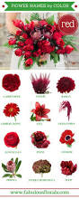 best 25 red flower names ideas on pinterest wedding flower