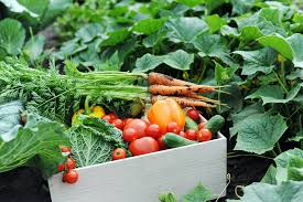 tips on planting a successful vegetable garden in perth very