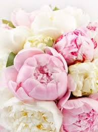 Peonies Delivery Get Different Flower Bunches Delivery In Pune On Special Occasions