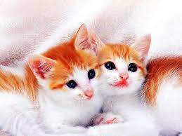 beautiful two white colour of cute cats sit together on the stone