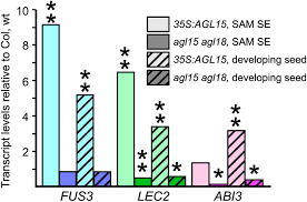 global identification of targets of the arabidopsis mads domain