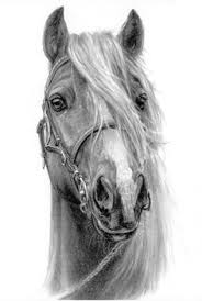 horse art for more great pins go to kaseybellefox art ideas