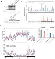 Sleep Number Bed Error E3 A Cryptochrome 2 Mutation Yields Advanced Sleep Phase In Humans