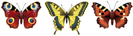 butterfly meaning and ideas