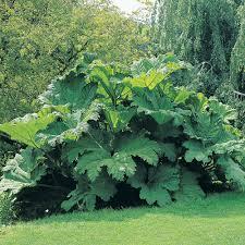 potted hardy plants thompson u0026 morgan