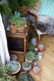 215 best indoor plants images on pinterest gardening plants and