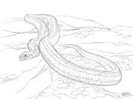 yellow rat snake coloring page free printable coloring pages