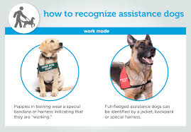 Comfort Dog Certificate Service Dogs Explained