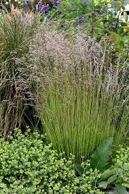 194 best ornamental grasses images on backyard patio