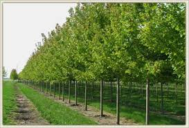 contact hoss tree farm big trees for less money family owned
