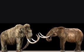 u0027s difference mammoth mastodon mental floss