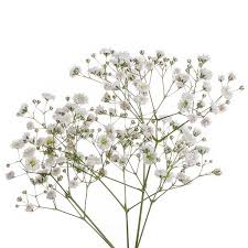 babys breath buy baby breath online bill s fresh flowers
