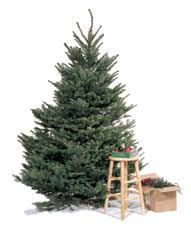 2014 2015 christmas tree recycling in los angeles county