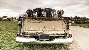 Truck Bed Dog Kennel Please Don U0027t Drive With Your Dog In The Back Of Your Truck Puppy