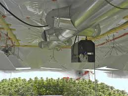 understanding marijuana grow room temperatures