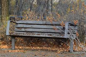 free images tree nature wood bench leaf fall seating seat