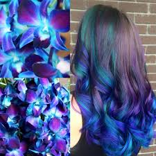 blue dendrobium orchids blue dendrobium orchids hair color hair colors ideas